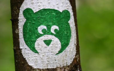 Search for brown bears in the Kocevje forest
