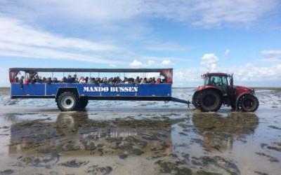 A la découverte de l'île de Mandø en Tracktobus