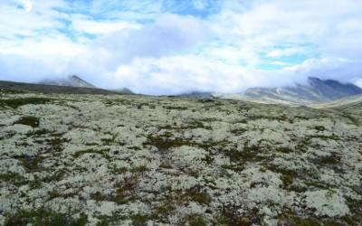 A la recherche d'un renne d'anniversaire à Rondane